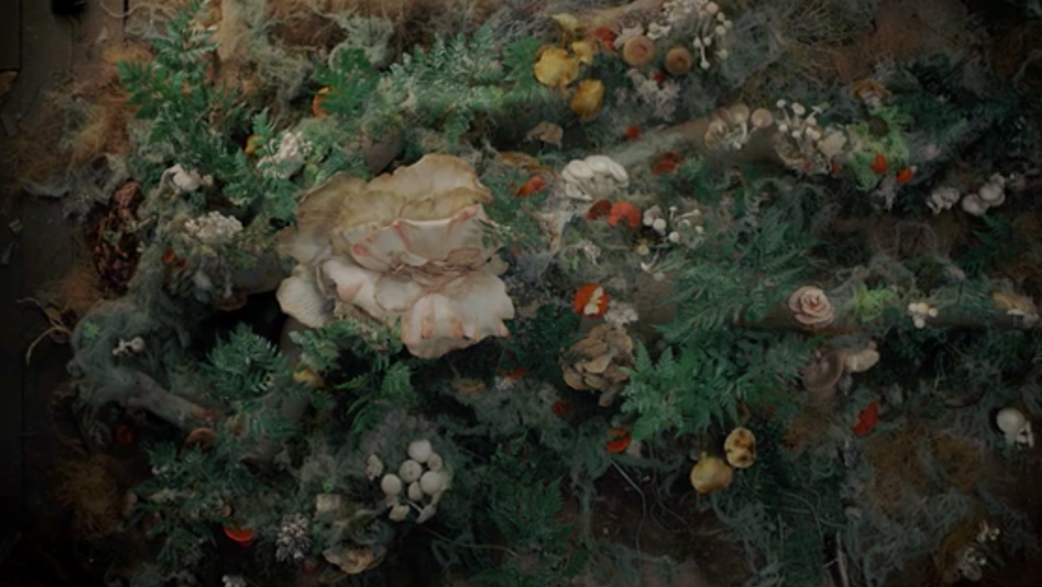 Corpse covered in plants and fungi in Gaia (2021)